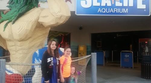 Sea Life Aquarium's New Exhibit Jellyfish Discovery Now Open!