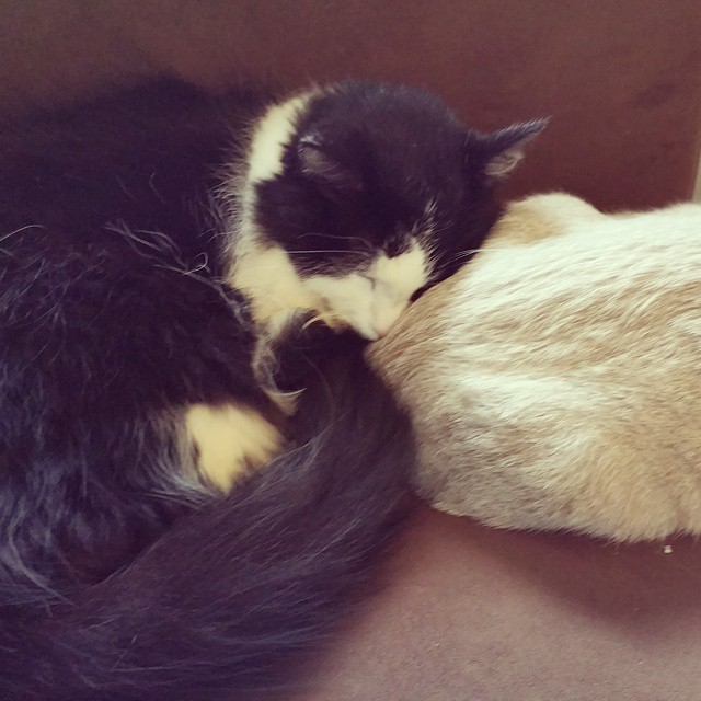 Love and acceptance... the old guy finally is accepting the little one and she is so happy that he is cuddling with her!  #cat #cats #catsagram #catstagram #instagood #kitten #kitty #kittens #pet #pets #animal #animals #petstagram #petsagram #photooftheday #catsofinstagram #ilovemycat #instagramcats #nature #catoftheday #lovecats #furry #sleeping #lovekittens #adorable #catlover #instacat