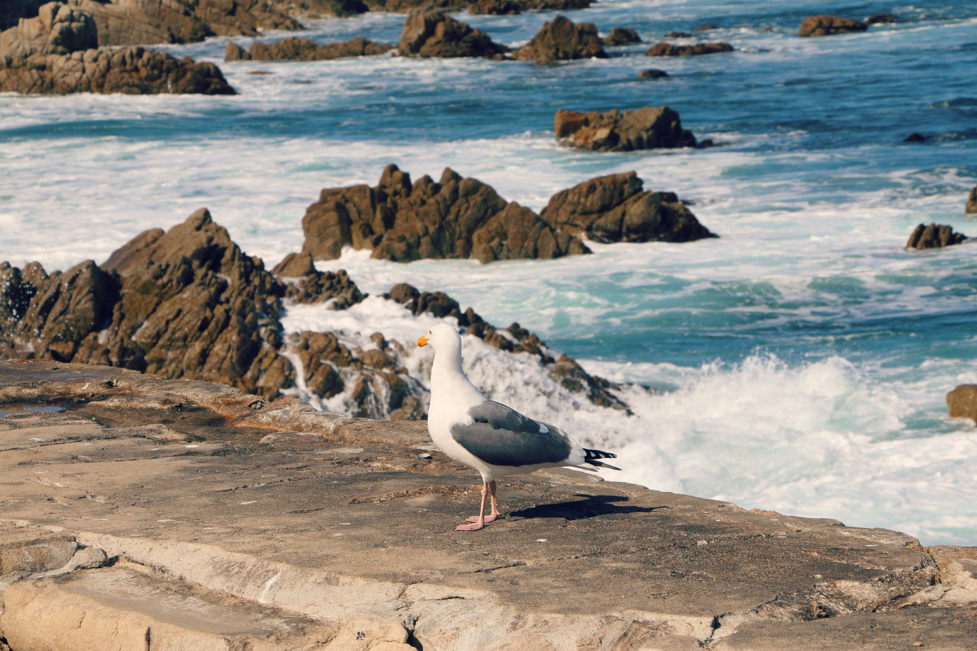 pacific grove vacation