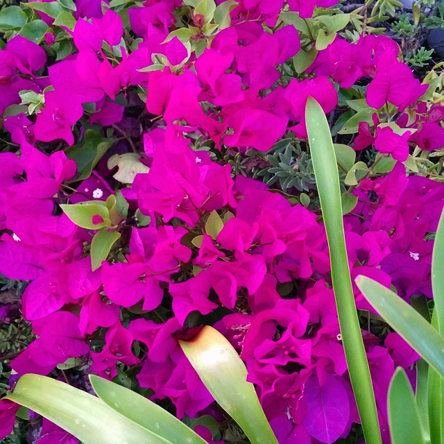 Loving the vibrant colors in our yard right now ofhellip