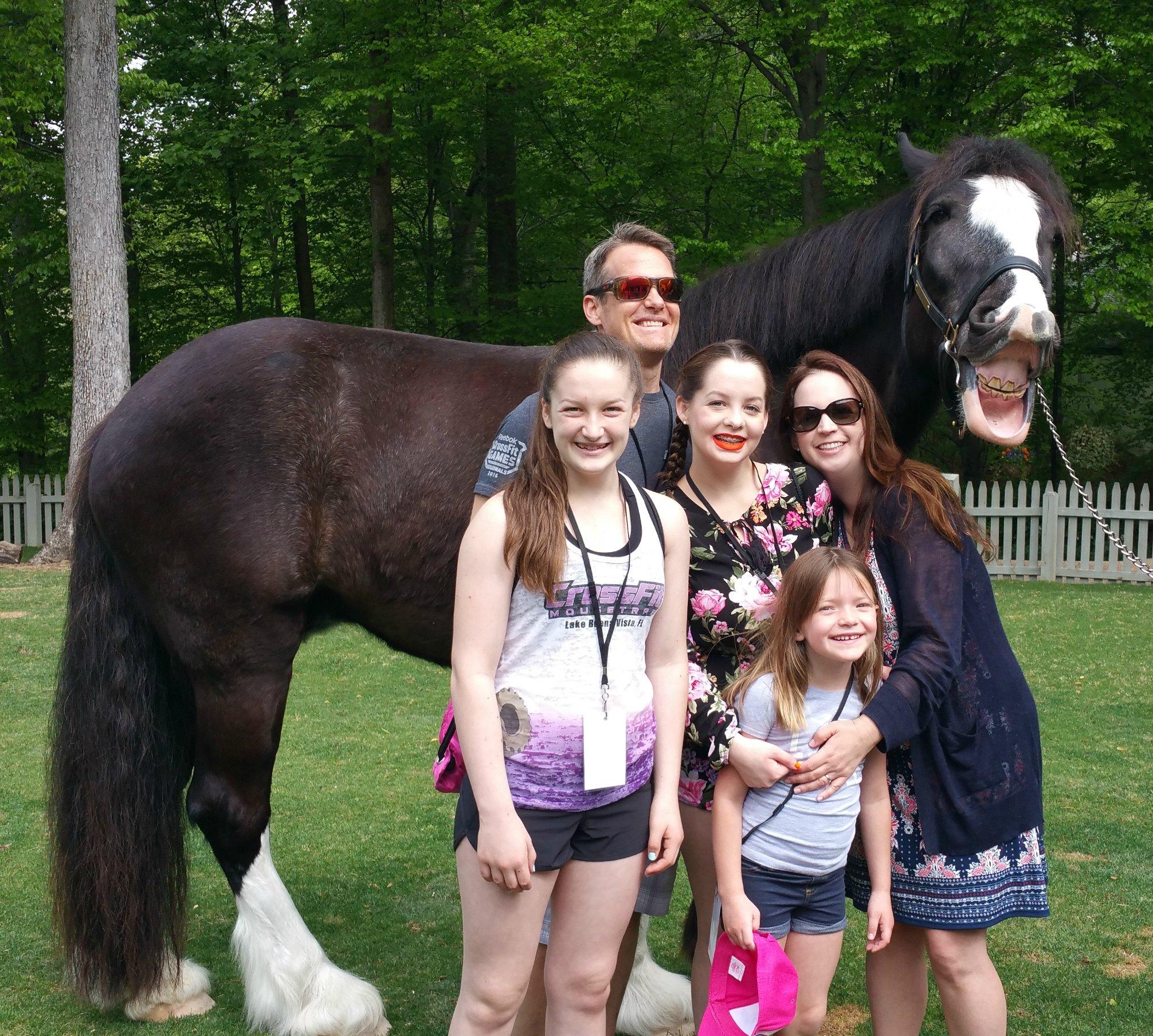 Clydesdale Busch Gardens VA