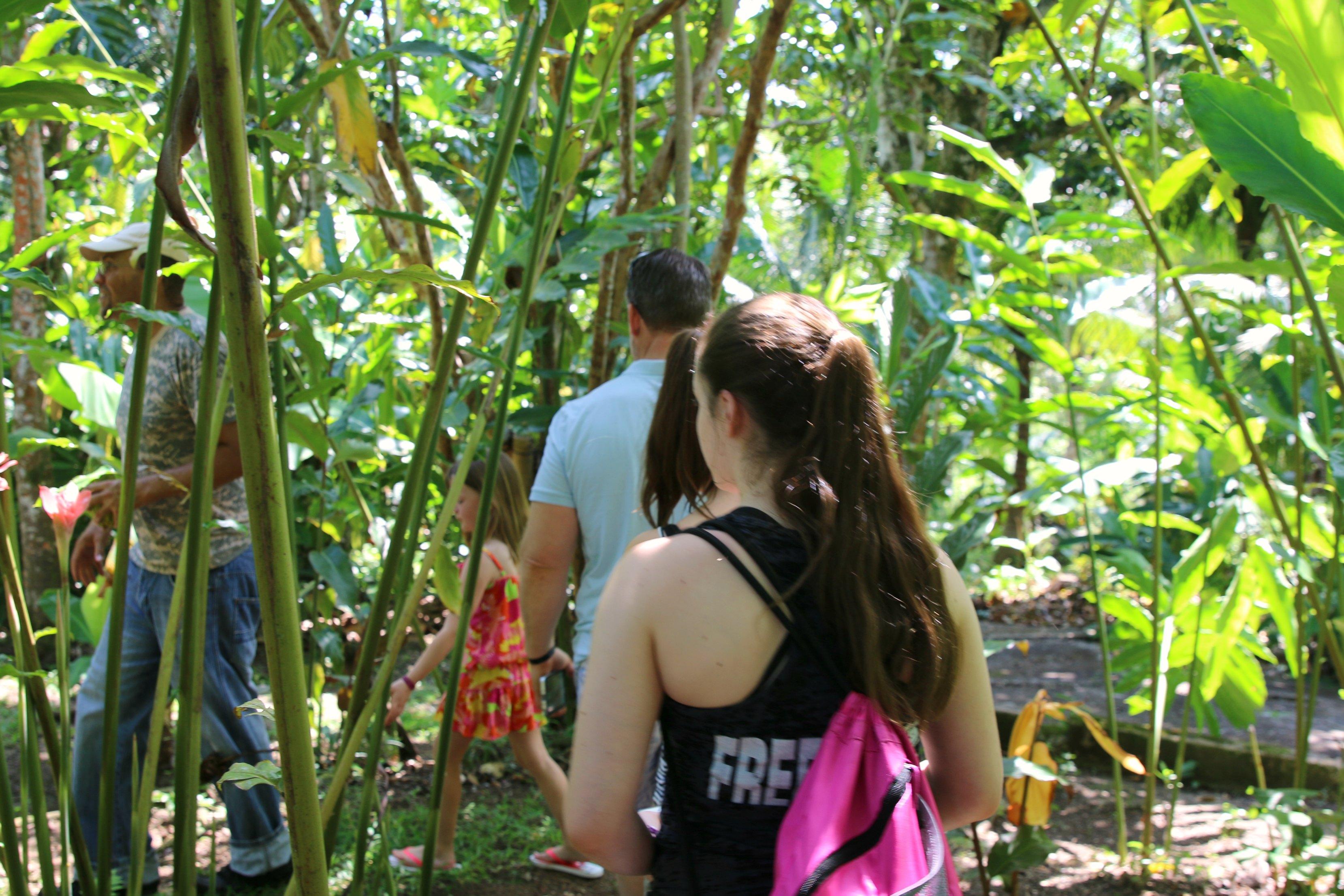 jamaica plantation tour