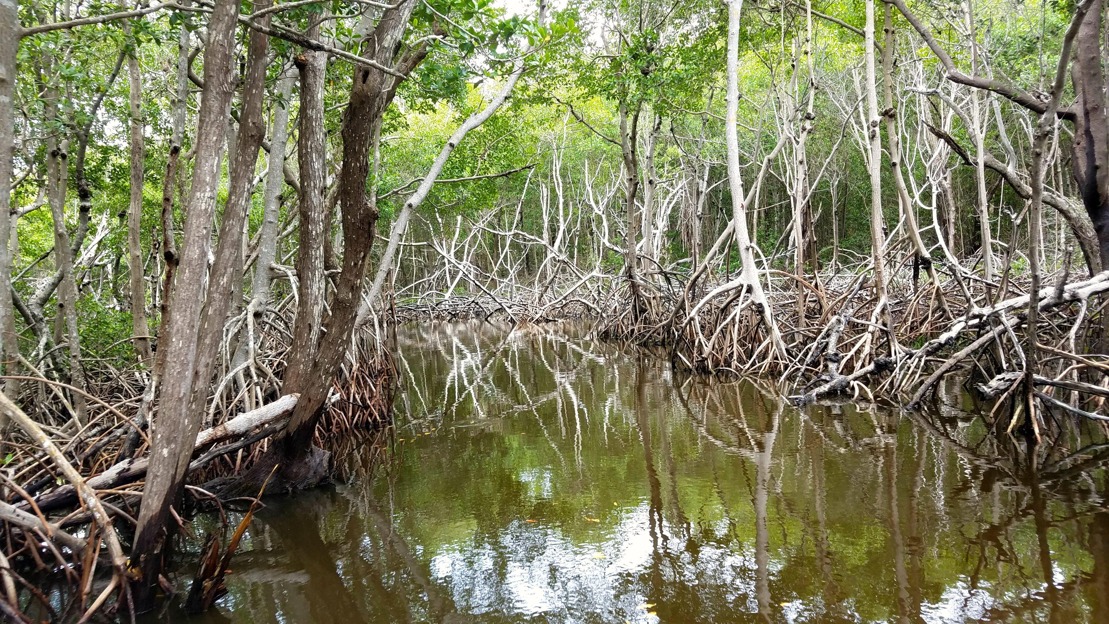 florida swamps