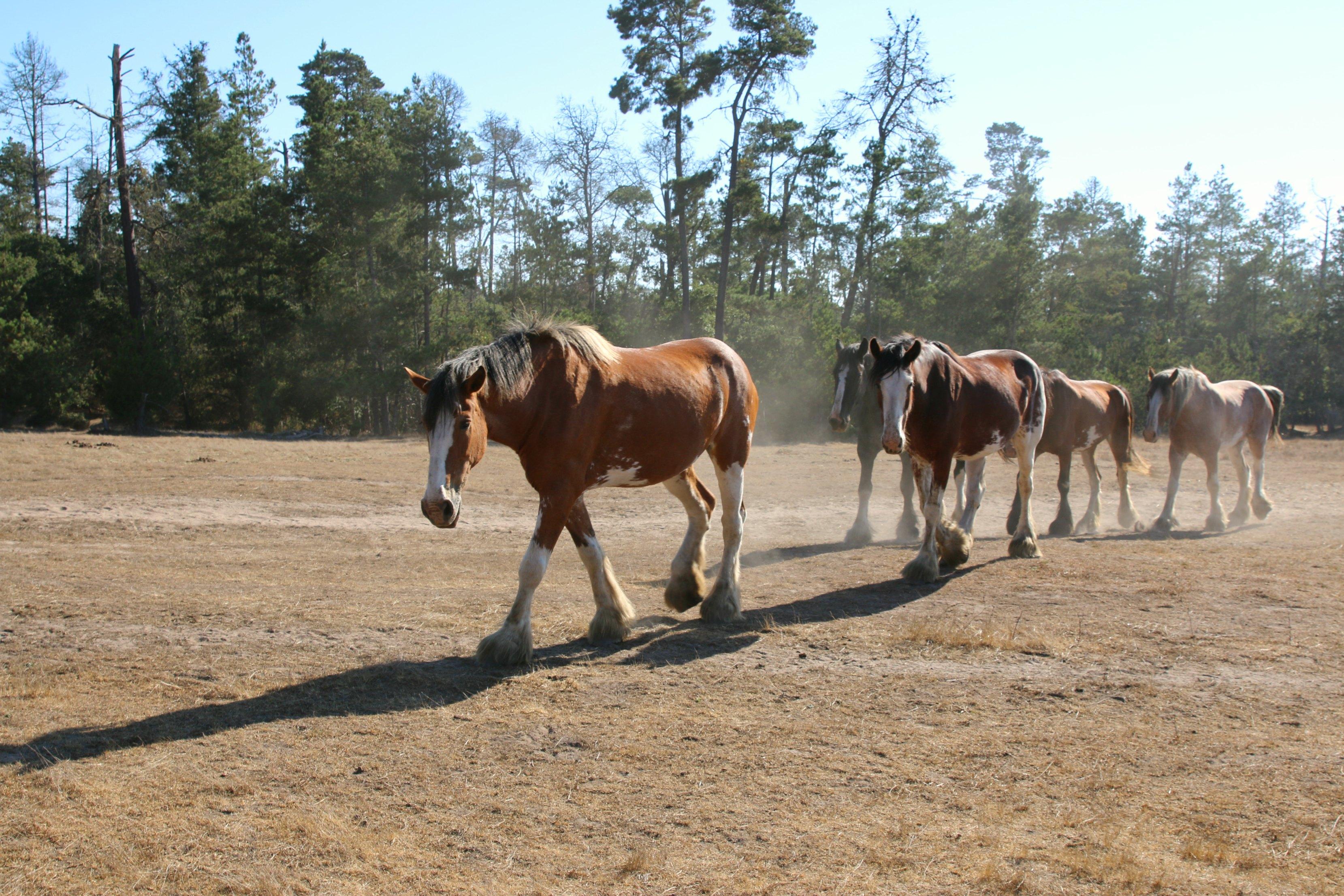 cambria-ranch