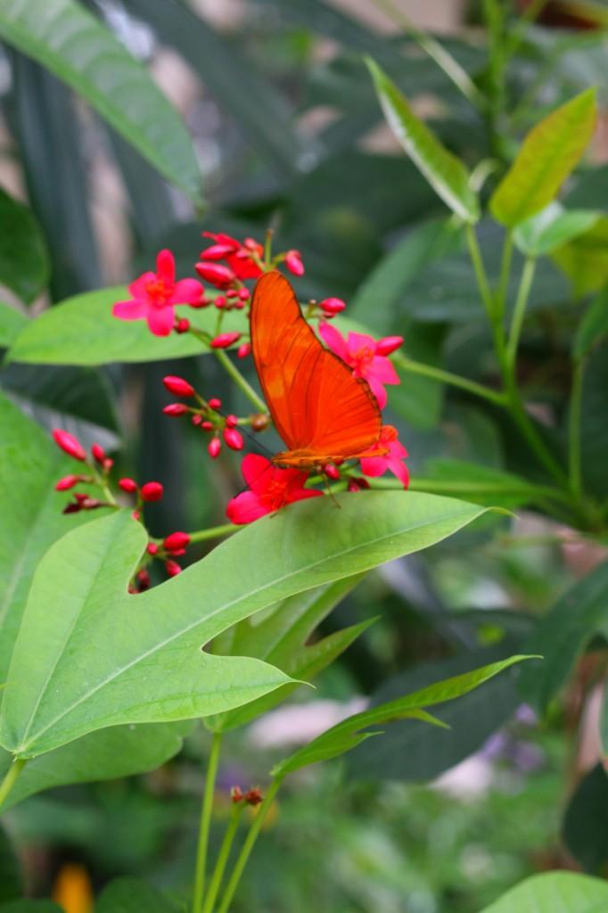 butterflyjunglesandiego