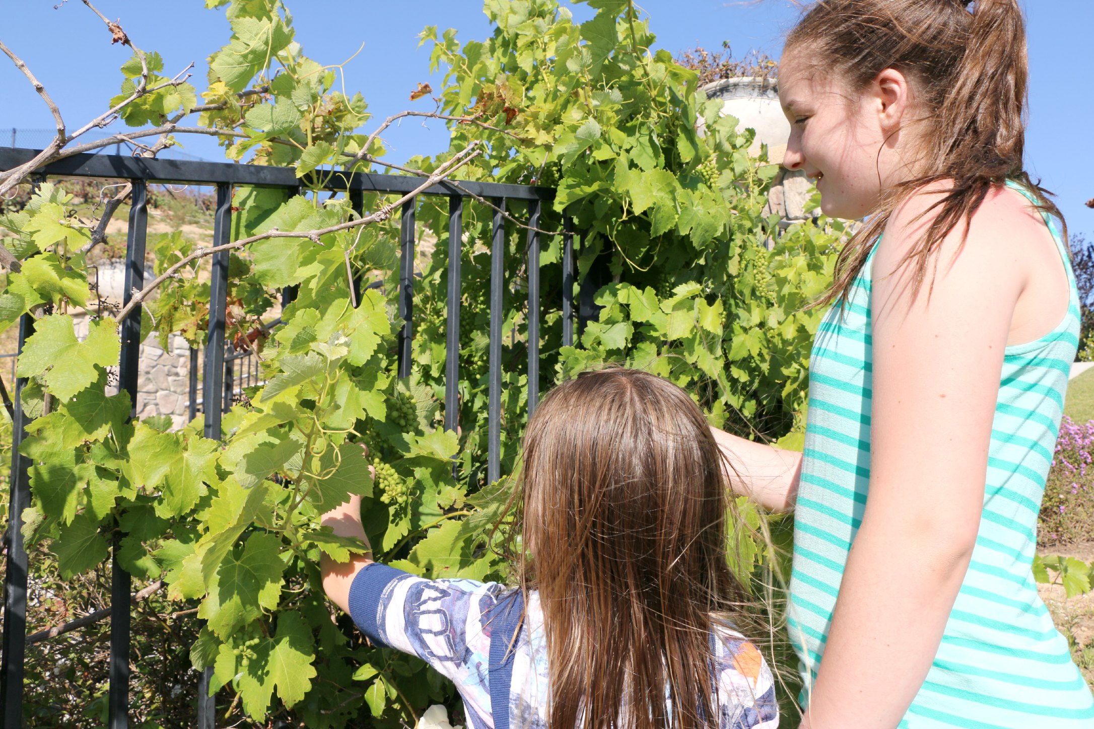 growing food with kids