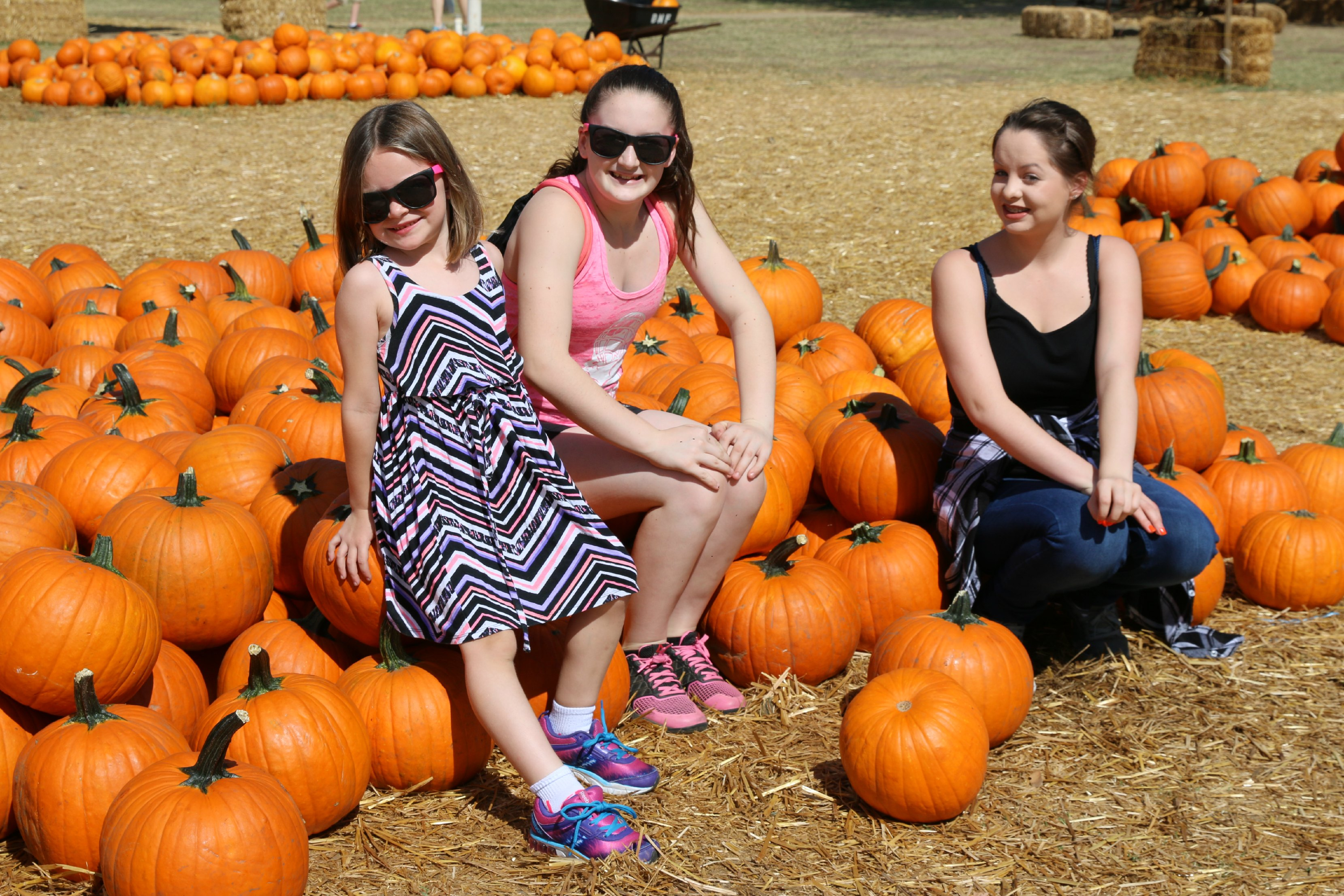 pumpkin patch san diego