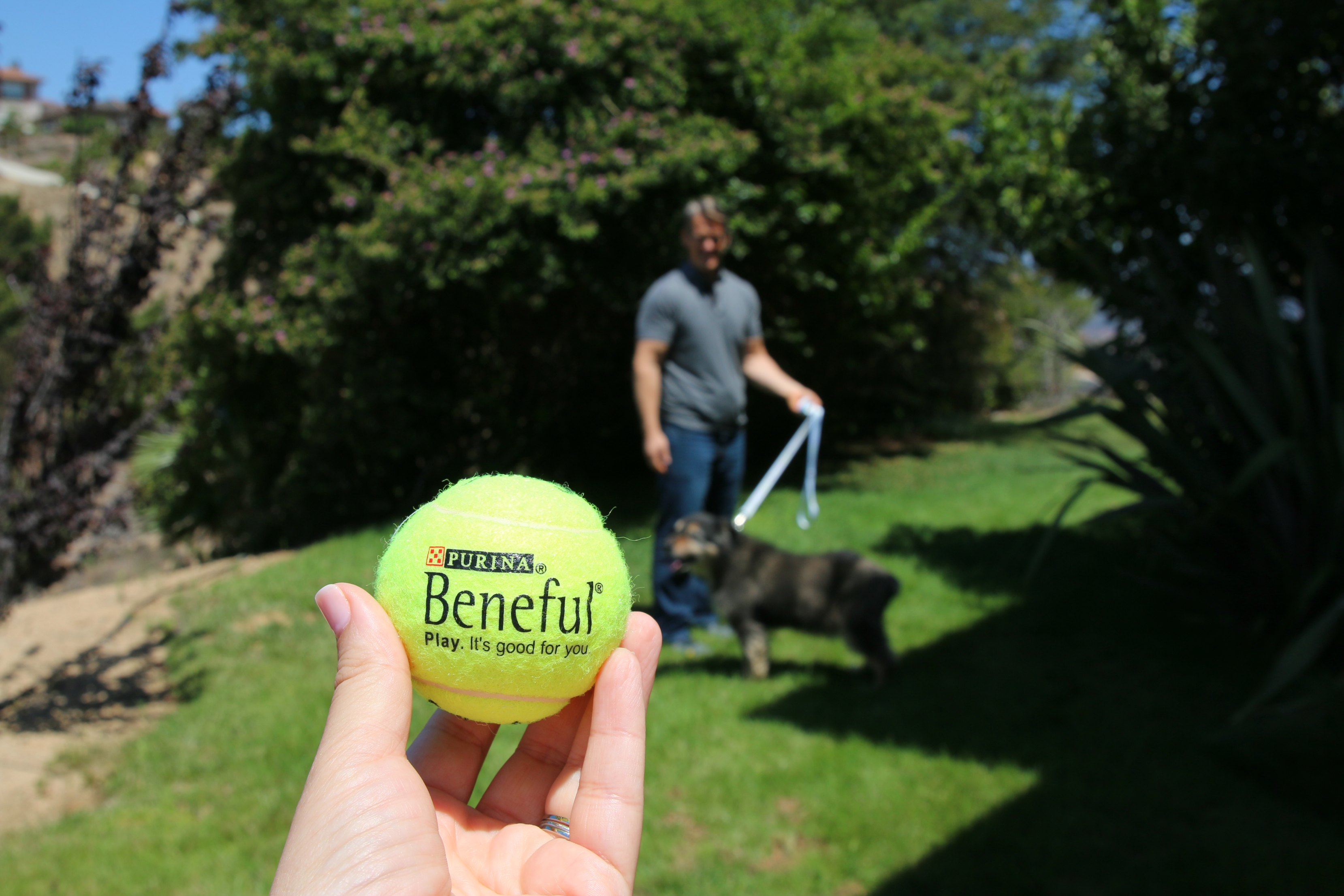 Beneful Dream Dog Parks