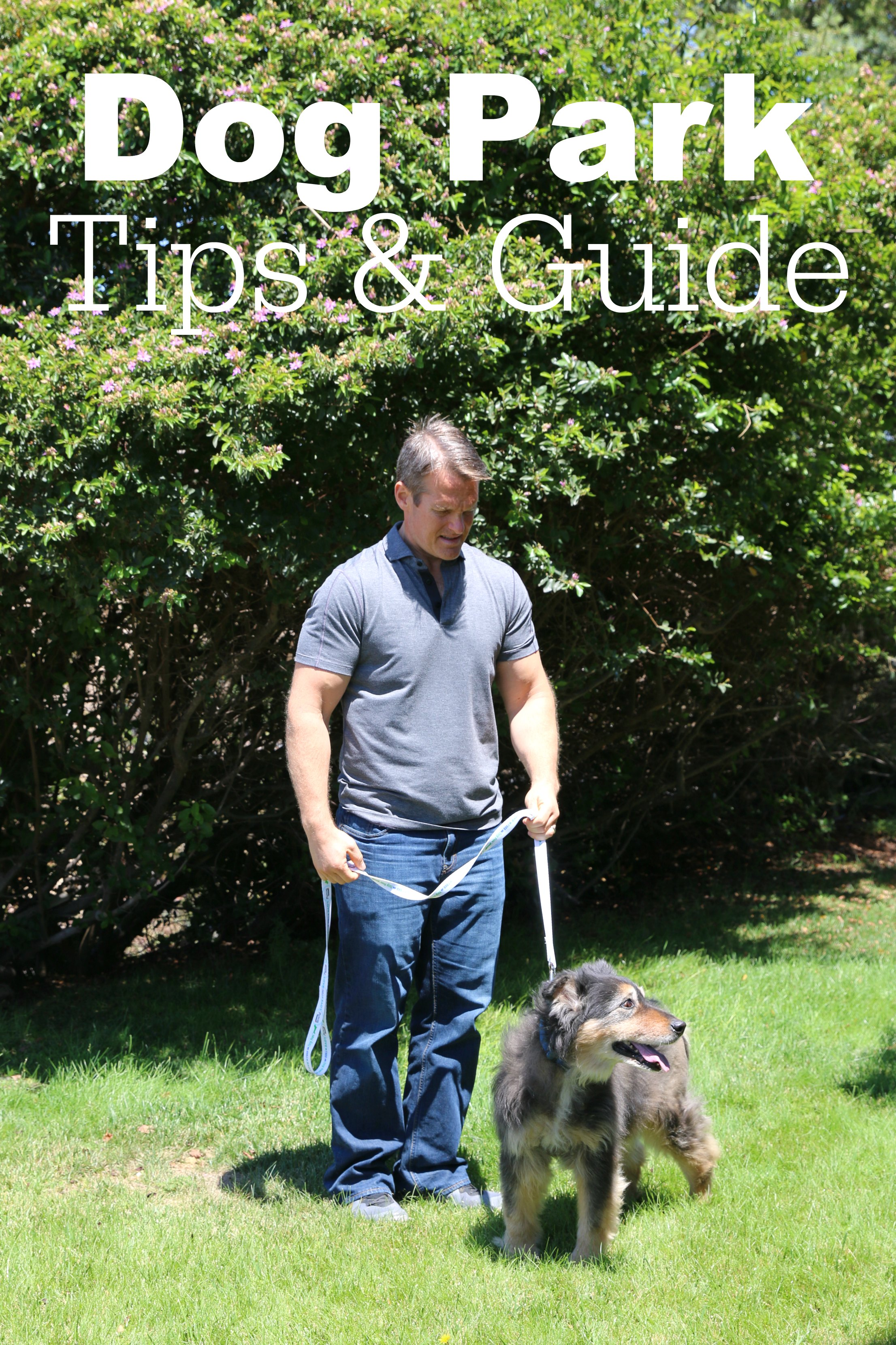 dog park tips and guides