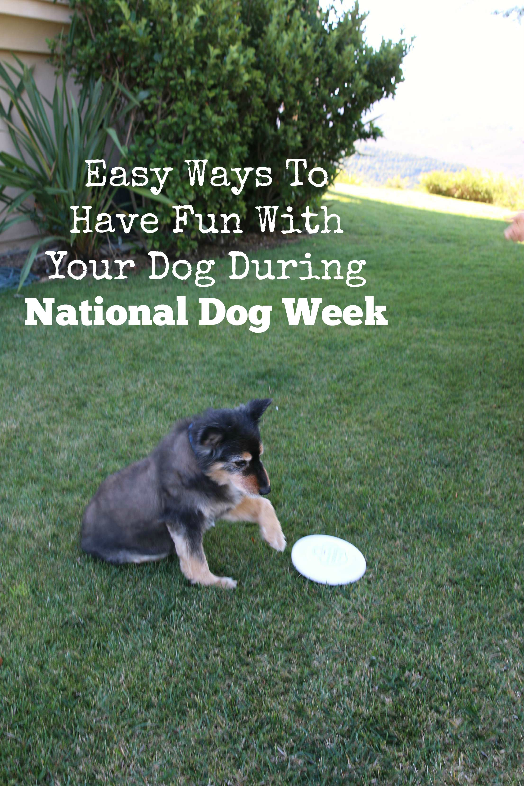 easy-ways-to-have-fun-with-your-dog