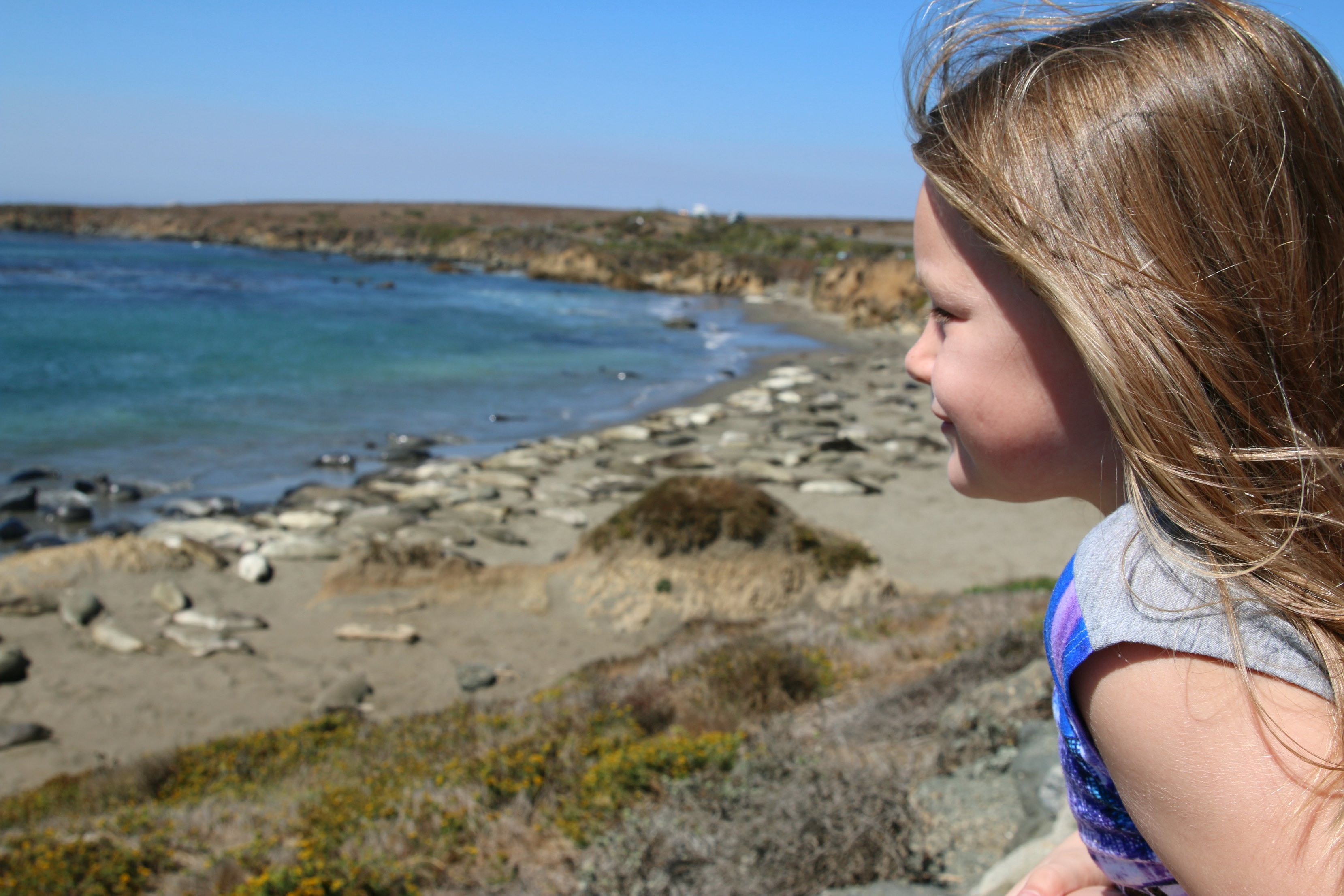 san-simeon-elephant-seals-viewing-area