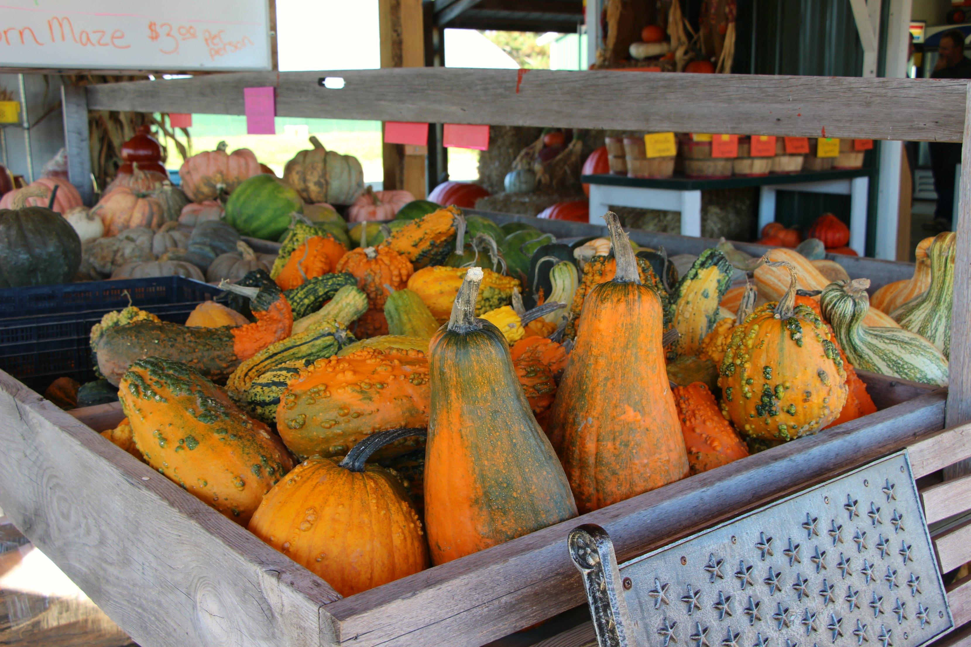 wisconsin-dells-pumpkins