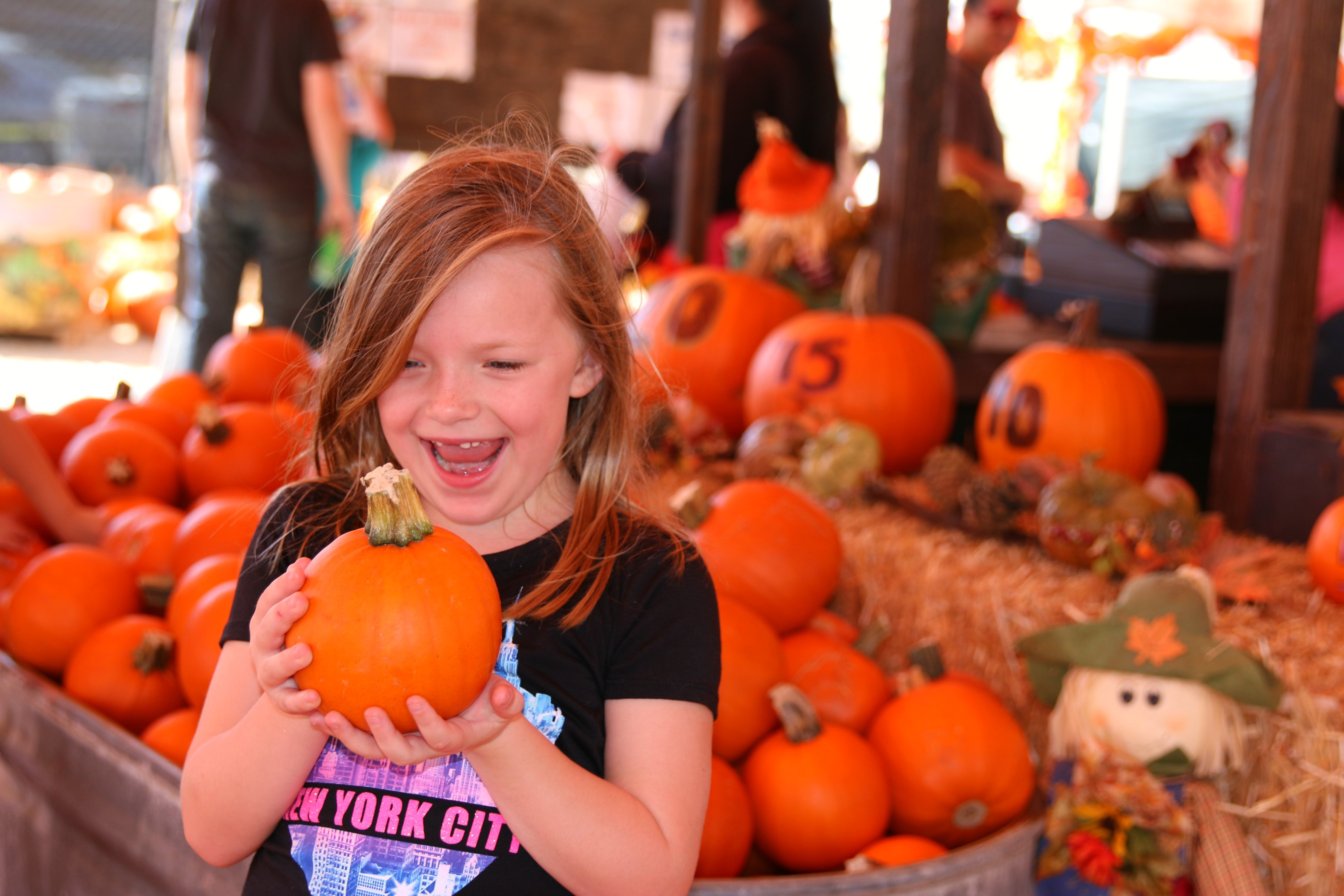 picking-the-perfect-pumpkin