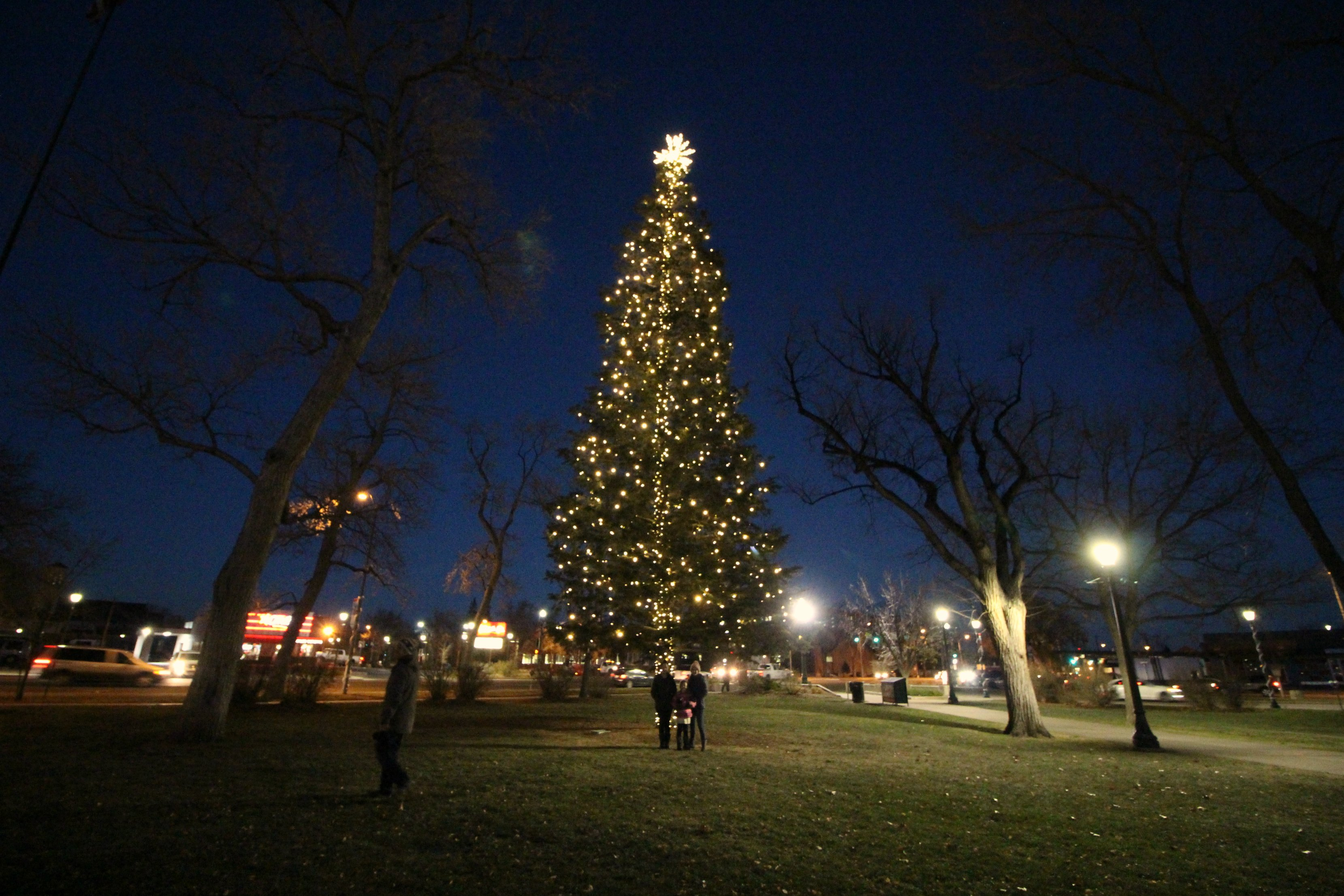 colorado-springs-christmas-tree