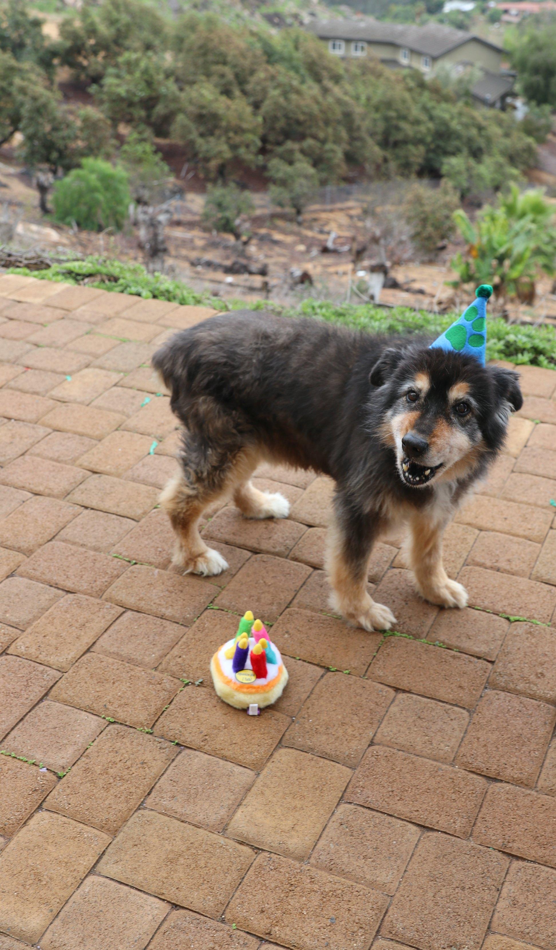 birthday-dog