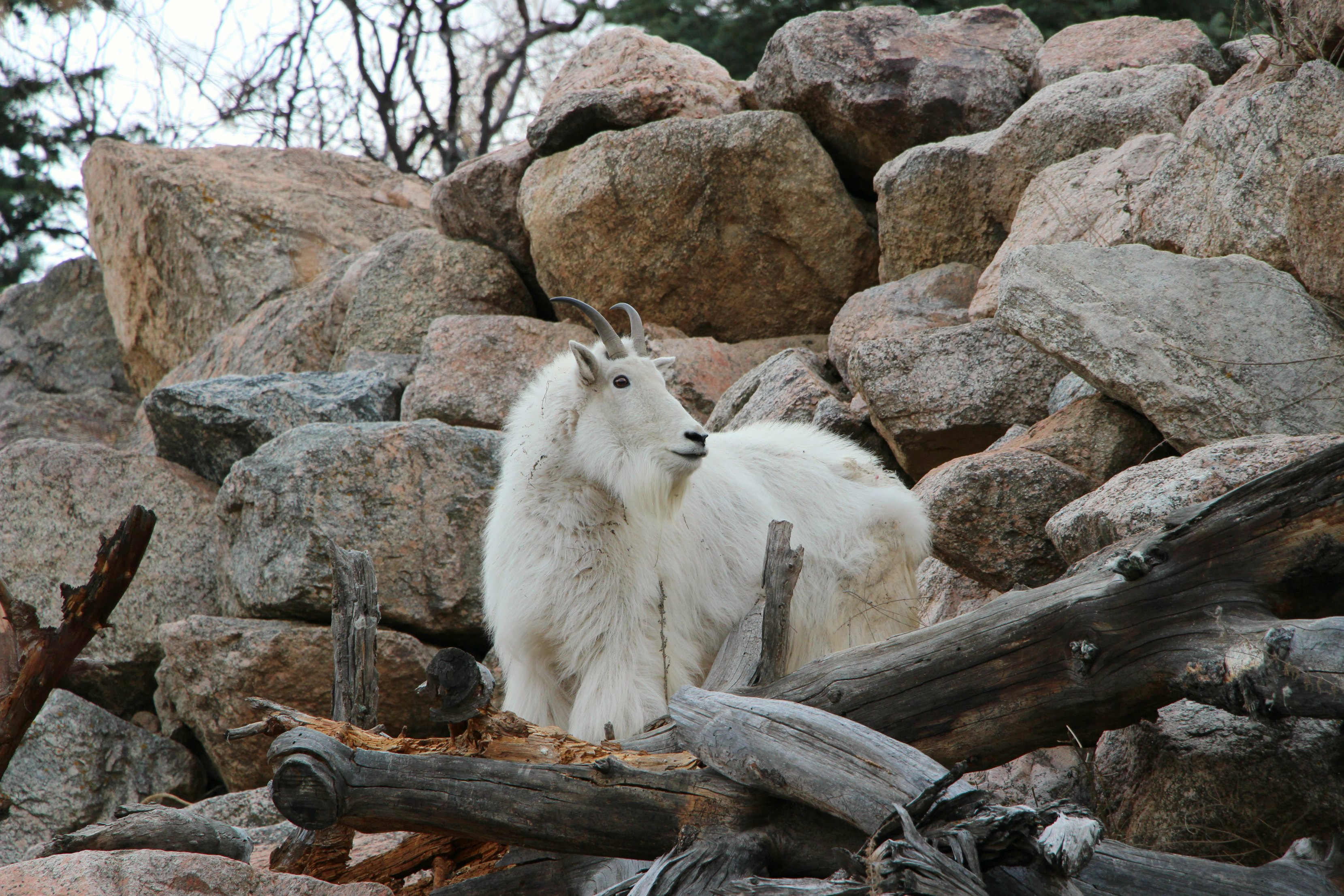 cheyenne-mountain-zoo