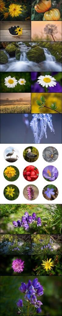 1-PREVIEW-macro-nature